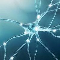 بلاکهای عصبی (Nerve         block)